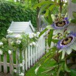 De tuin klaar maken voor de zomer: nu is het moment!